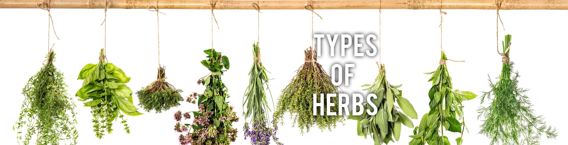 Types of Herbs RC Willey Blog