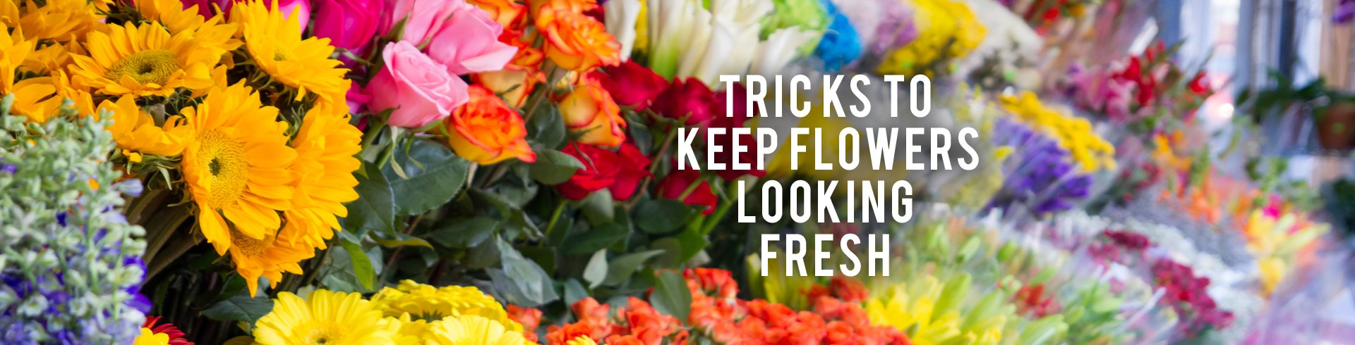 Tricks to Keep Flowers Looking Fresh