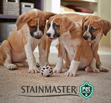 Three young puppies with their favorite chew toy on Stainmaster® PetProtect® carpet