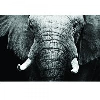 Large Black and White Elephant Tempered Glass Canvas Artwork