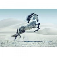 White and Gray Horse Tempered Glass Canvas Artwork