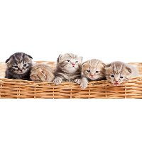 1171347 LightHeaded Bed 5 Kittens in a Basket Image