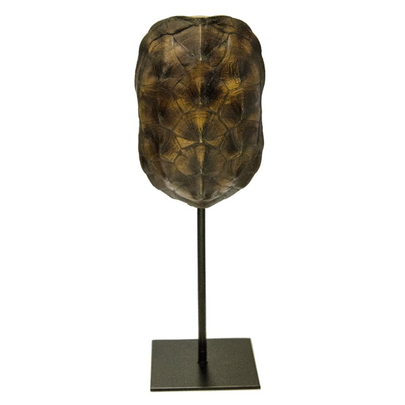 13 inch dark brown turtle shell on stand rcwilley image1~800