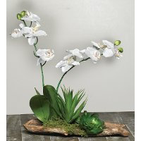 Orchids with Succulents on Rustic Branches Arrangement