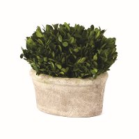 9 Inch Oval Preserved Boxwood Topiary Arrangement