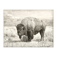 Buffalo Canvas in a Cream Floating Frame