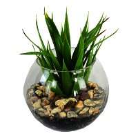 Mini Yucca With Pebbles In Glass Bowl Arrangement