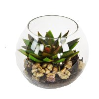 Star Etchie Arrangement with Pebbles in Glass Bubble Bowl