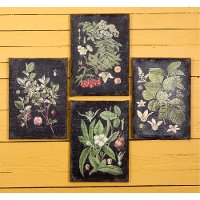 Assorted Botanical Wall Art on a Black Background