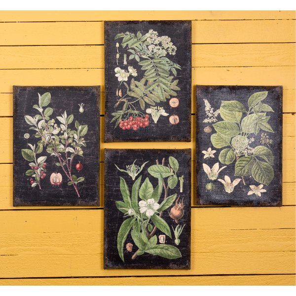 ... Assorted Botanical Wall Art On A Black Background