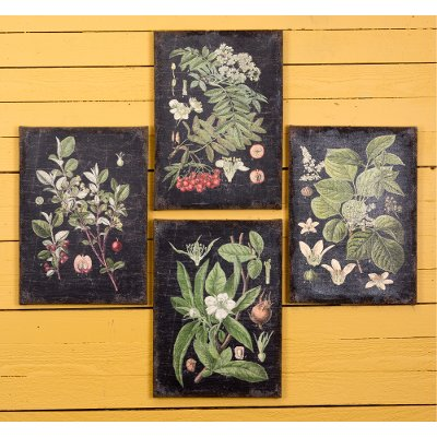 Botanical Wall Art assorted 'botanical' wall art | rc willey furniture store