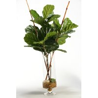 164029 Fiddle Leaf Fig Branches Arrangement in Glass Vase