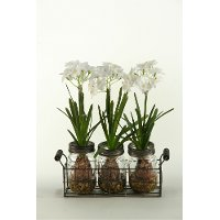 165037 White Bulbs in Glass Jars in a Metal Holder Arrangement