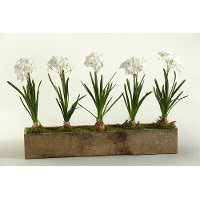 165043 White Bulbs Arrangement in a Wooden Rectangular Planter