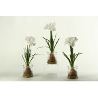 167024-S/3-IND Assorted White Bulb Arrangement In a Glass Jar