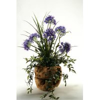 Blue Agapanthus Arrangement In Oval Wooden Planter