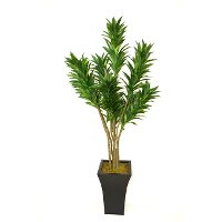 56 Inch Green Dracaena Potted Tree Arrangement