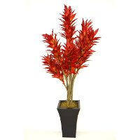 Red Potted Dracaena Arrangement