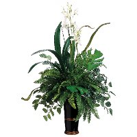Fern Fittonia Arrangement