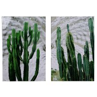 Assorted Cacti Print Canvas Wall Art