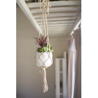 Hanging Macrame Potted Succulent Arrangement
