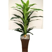 15332 6 Foot Corn Plant Arrangement
