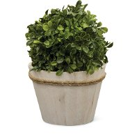 KM378 12 Inch Boxwood Ball Arrangement