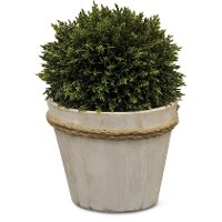 9 Inch Boxwood Ball Arrangement