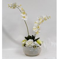33 Inch White Orchid Arrangement In White Pot