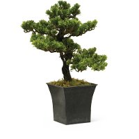 19 Inch Bonsai Arrangement In Square Pot
