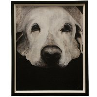 Transitional Dog Textured Framed Print Wall Art
