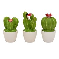 Assorted Green Ceramic Cactus Topper With A White Jar