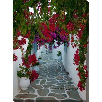 Bougainvillea Path Patio Canvas Outdoor-Indoor Wall Art