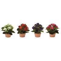 7 Inch Assorted Polyester Kalanchoe Arrangement In Pot