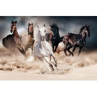 Multi Color Running Horses Print on Glass Wall Art