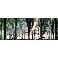 In The Woods Printed on Glass Set of 3