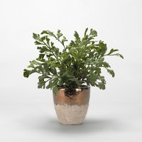 Faux Green Hare's Foot Fern in Rustic Ceramic Planter