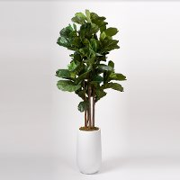 Faux Green Brazilian Fiddle Leaf Fig Tree Arrangement in White Planter