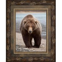 Grizzly Bear Framed Wall Art