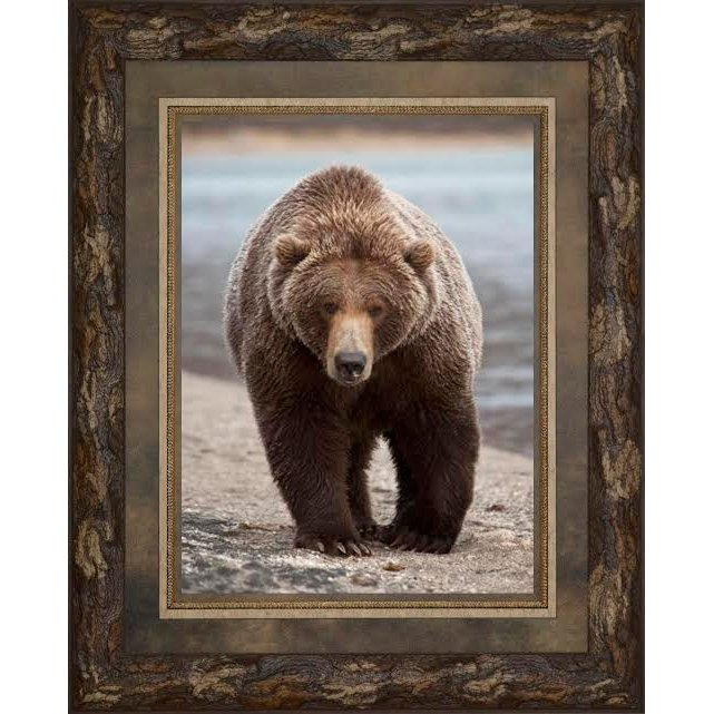 Grizzly Bear Framed Wall Art   RC Willey Furniture Store