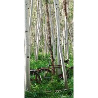 Right Aspen Heard Canvas Wall Art with Bicycles