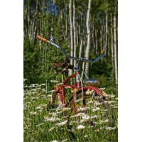 Aspen Daisy with Bicycle Canvas Wall Art