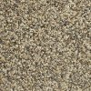 Phenix Stainmaster Bleeker Street Carpet