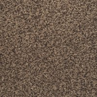 Dixie Stainmaster Bashan Carpet