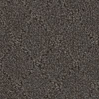 Phenix Stainmaster Clever Expression Carpet