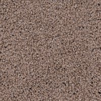 Phenix Stainmaster Shoreline Carpet
